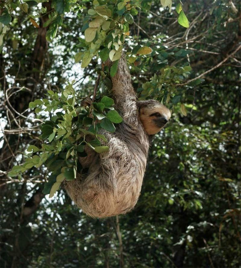 探索 地球之肺 亚马孙热带雨林